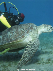 Igor - the best diver I know, and a turtle in Abu Dabbab,... by Blaza Jovanovic 